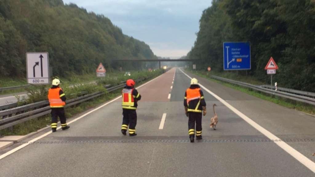 Schwan-Alarm auf der Autobahn: Feuerwehr sperrt A46