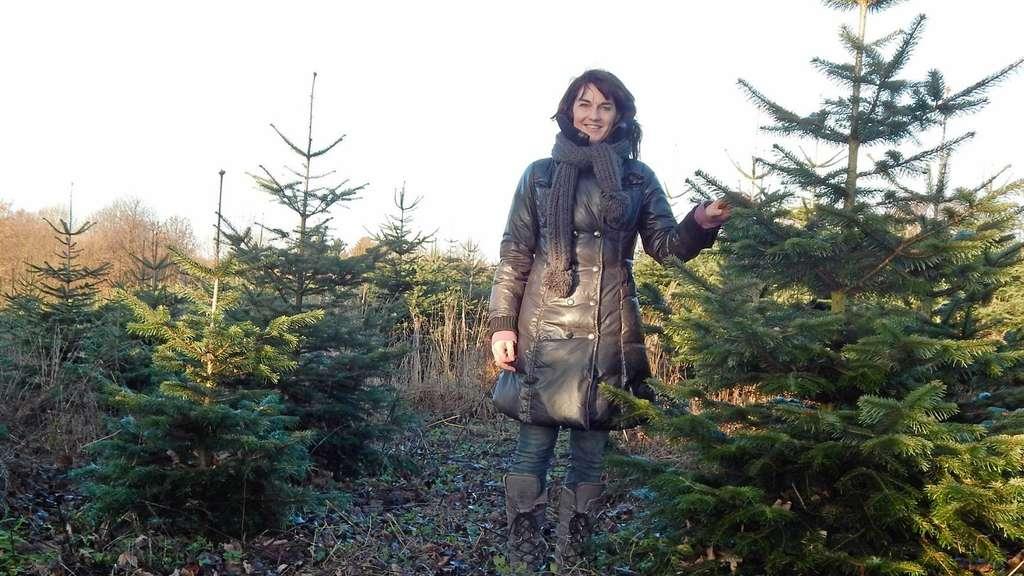 Bio weihnachtsbaume halver