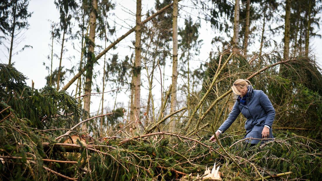 Umwelt-Ministerin Schulze-Föcking begutachtet Sturmschäden in Ense-Gerlingen