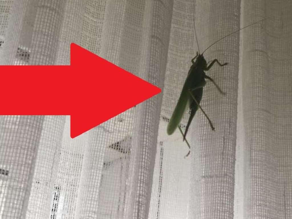 insekt mit stachel