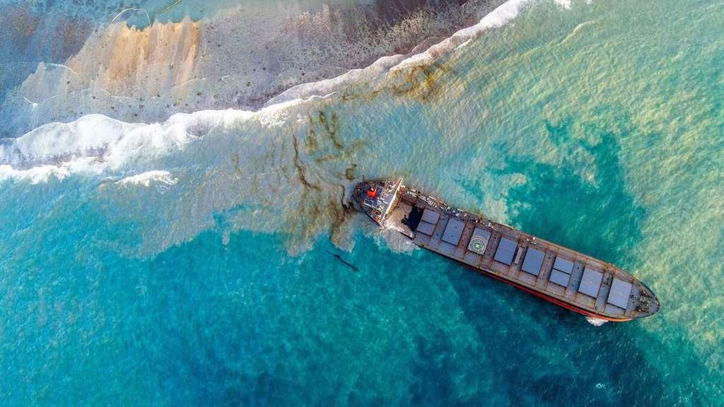 Weißer Hai Vor Mallorca