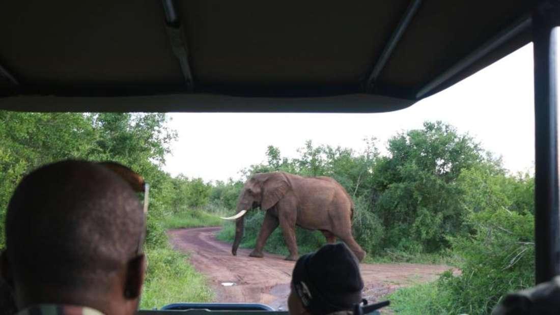 Elefant in Sicht