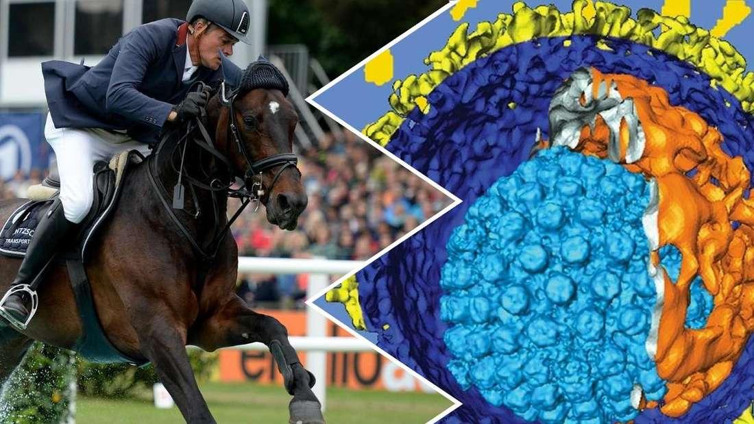 Reiter Hilmar Meyer bei einem Pferdereitturnier, die Abbildung rechts daneben zeigt das Herpes-Virus.