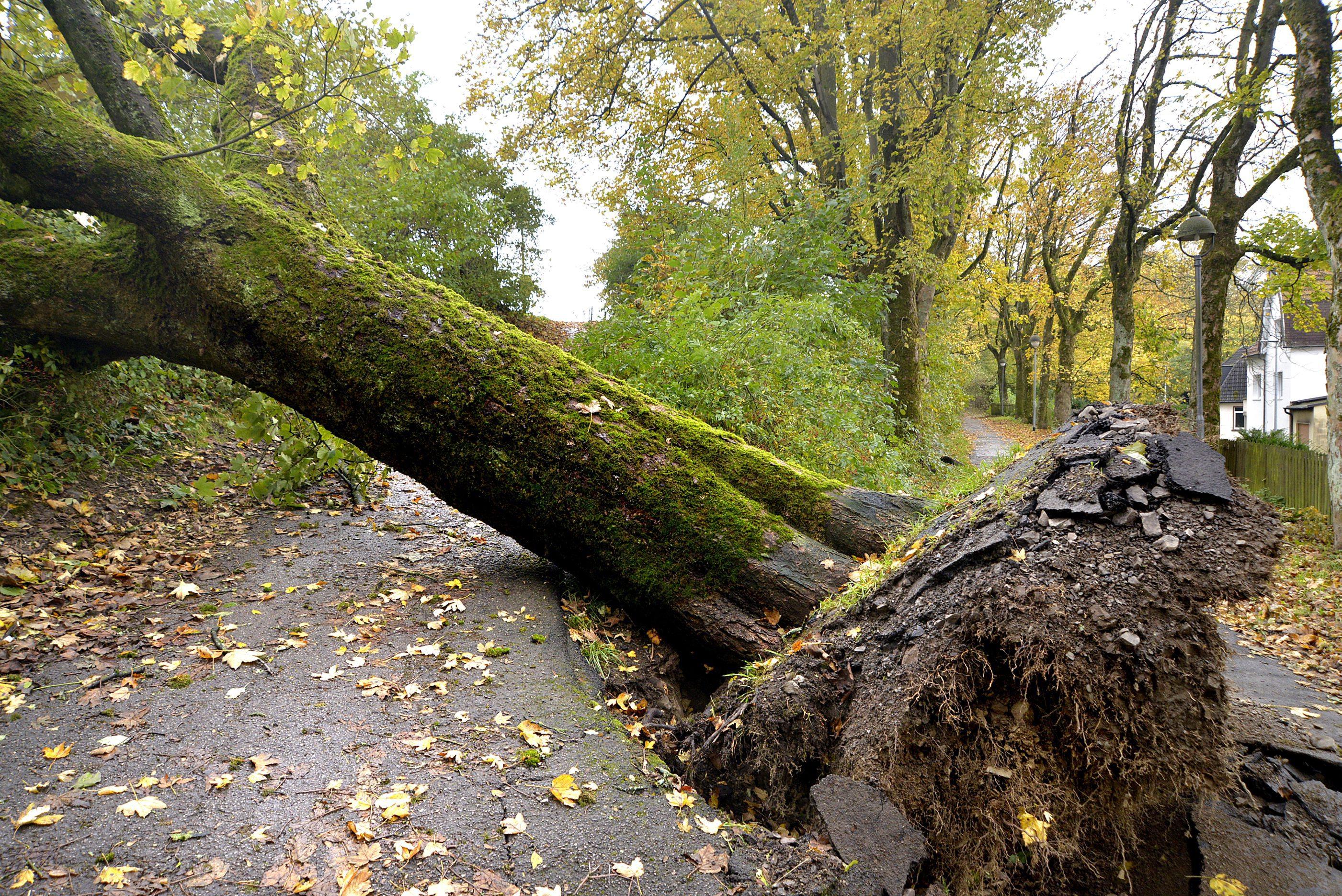 An Schützenhalle im MK: Großer Baum stürzt auf Fußgängerweg